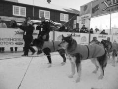 Thumbnail image for brent dogs re.jpg