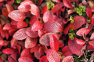 秋の紅葉・黄葉と秋オーロラ画像